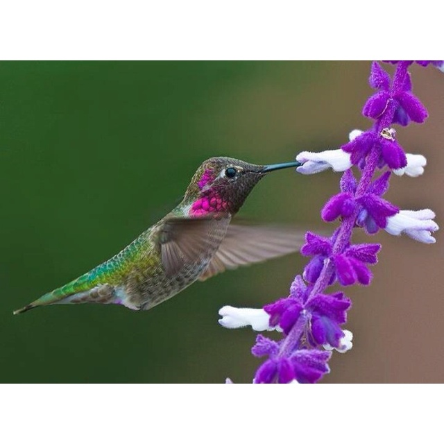 Precious hummingbird!Nature, Hum Birds, Beautiful, Vibrant Colors, Feathers, Weights Loss, Photography, Hummingbirds, Animal