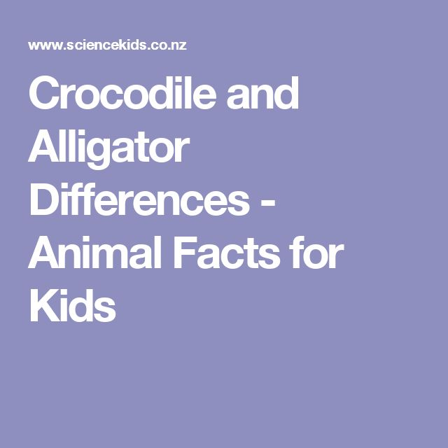 Crocodile and Alligator Differences - Animal Facts for Kids
