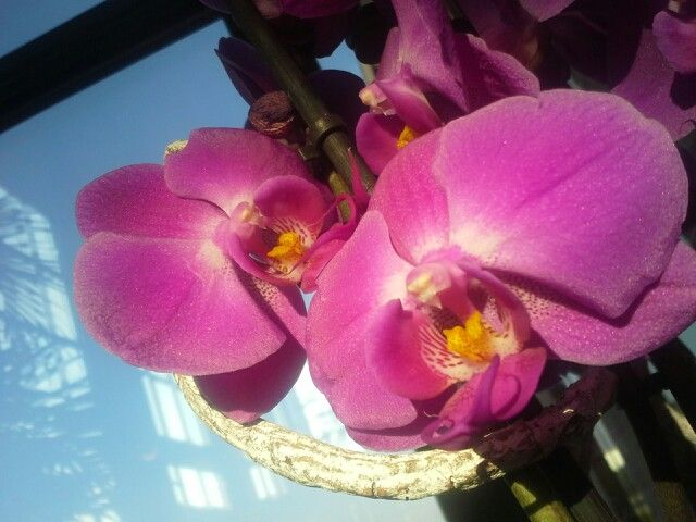 Sunny orchid