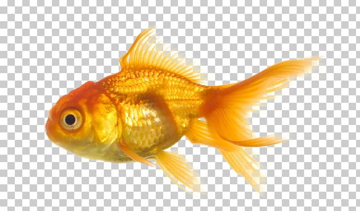 Pin By Imgbin On Fish Psd Texture Png Fish