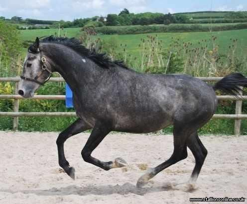 Click to see full details for Trevoulter Lord Locarno