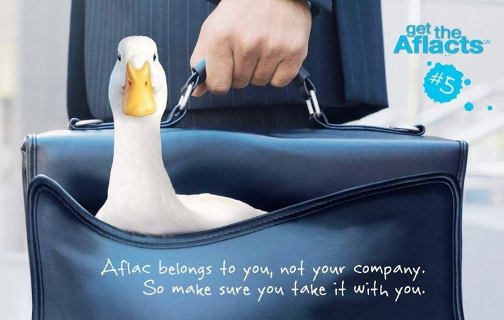 Aflac duck auditions draw flock; great white lurks in Australian - aflac claim form