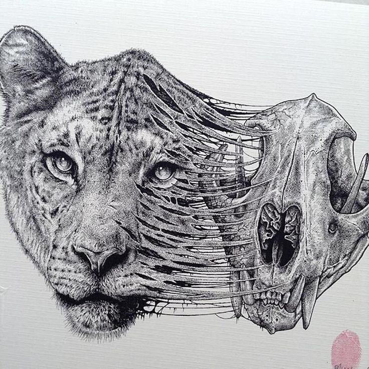 Animals Evolve Out Of Their Skeletons In Dark Drawings By Paul Jackson