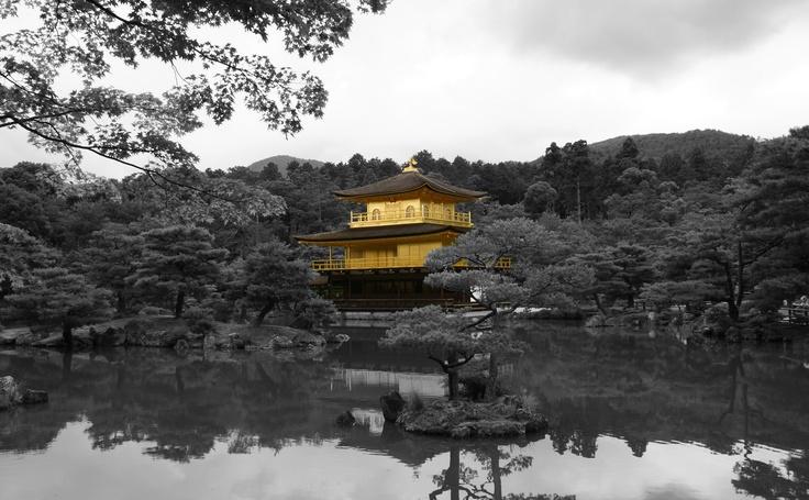 Black and white trees amongst a golden pavilion at Kinkaku-ji, Kyoto, Japan