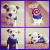 Too Cute puppy love