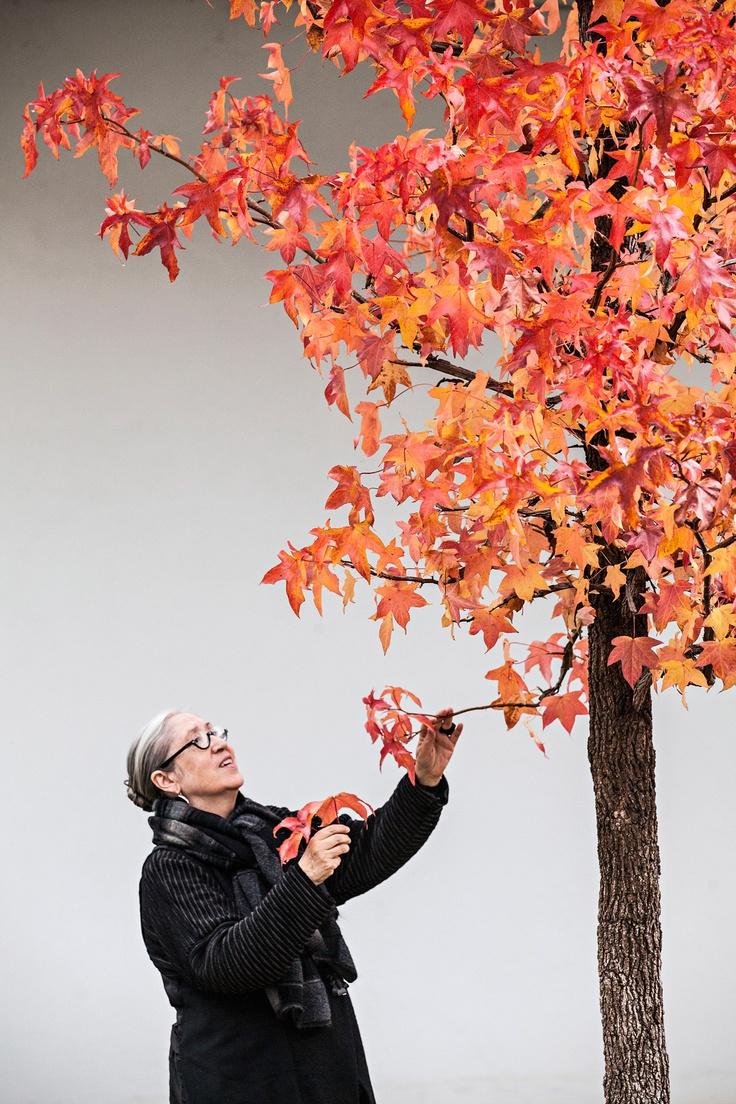 Graça Morais, by Nelson Garrido.  As melhores imagens dos fotojornalistas do PÚBLICO - PÚBLICO