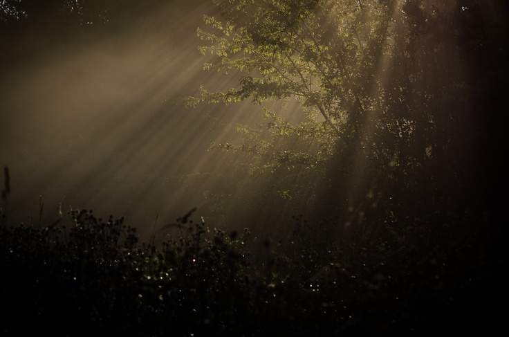 Early rays  http://500px.com/photo/11710007