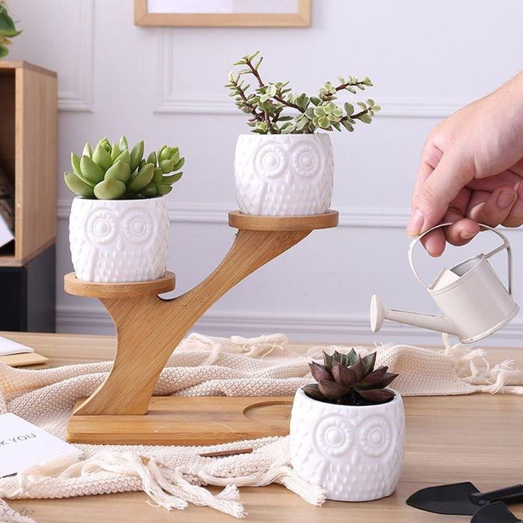 Material: Ceramic, BambooPot size: 6x7x5cmShelf size: 20x16.5cm (Width x Height)Color: WhiteQuantity: 1 set Ceramic Flower Pots, Ceramic Owl, Flower Planters, Cactus Planters, Cactus Flower, Cactus Ceramic, Ceramic Planters, Cacti, Bamboo Tree