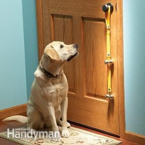 """Bells on the door -""""If you're a pet lover, this collection of tips is for you! Check out these clever and unusual ideas about how to make your pet happier, healthier and more comfortable, using items you'll find around the house."""""""