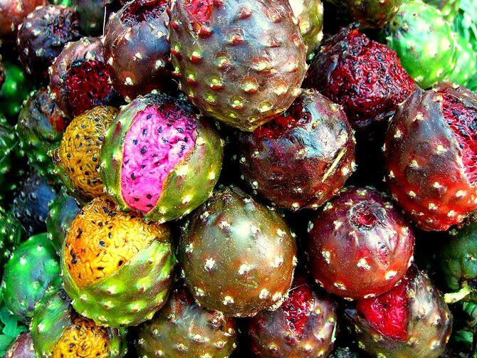 exotic mexican fruits pitaya