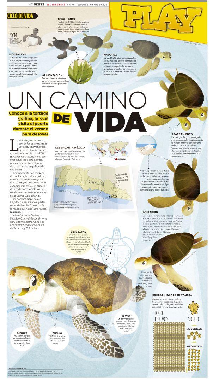Tortugas marinas #infografia