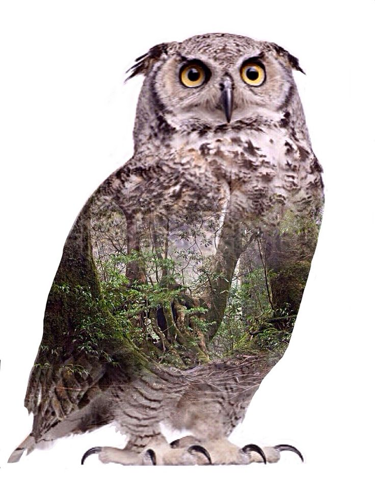 Animalscape owl forest