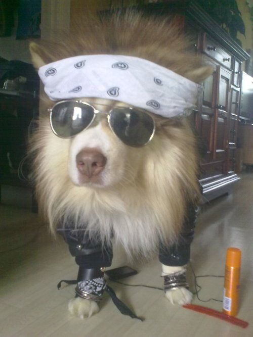 haha :DAviators, Girls Generation, Axl Rose, Pets, Funny, Coolers, Dogs Humor, Rocks Rolls, Animal