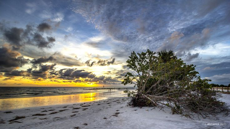 Uprooted - One lone uprooted tree, and yet a beautiful sunset on the beach at Honeymoon Island in Dunedin, Florida belies the devastation that was wrecked on these shores by the passing of Hurricane Hermine, days earlier at the beginning of September 2016. The State Park beaches dodged a direct hit but saw considerable erosion, broken fences and plantings of trees and grasses unearthed.