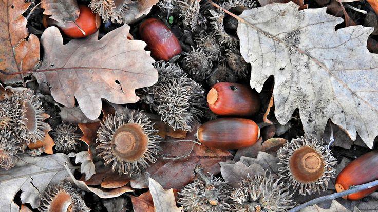 Makkok az avarban ősz Evamail007 képe.