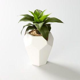 Plastic Agave Plant in Geometric Pot