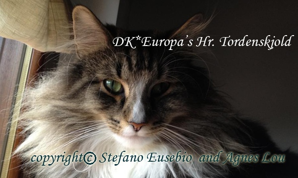 My foundation (Dragons Wood) DK* Europa's Hr. Tordenskjold  HCM 1st and 2nd scan - negative