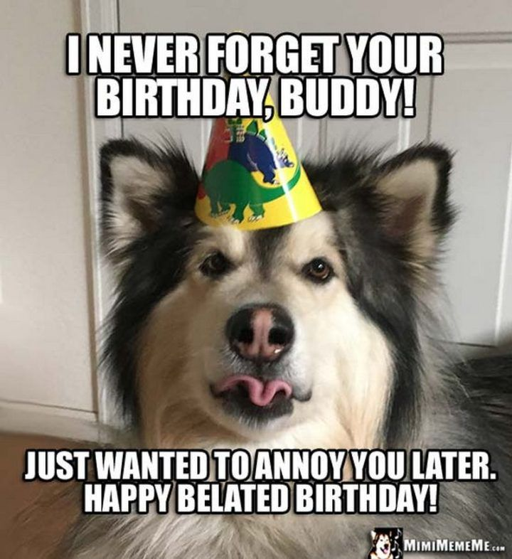 85 Happy Belated Birthday Memes For When You Just Forgot Birthday Jokes Happy Birthday Funny Belated Birthday Wishes