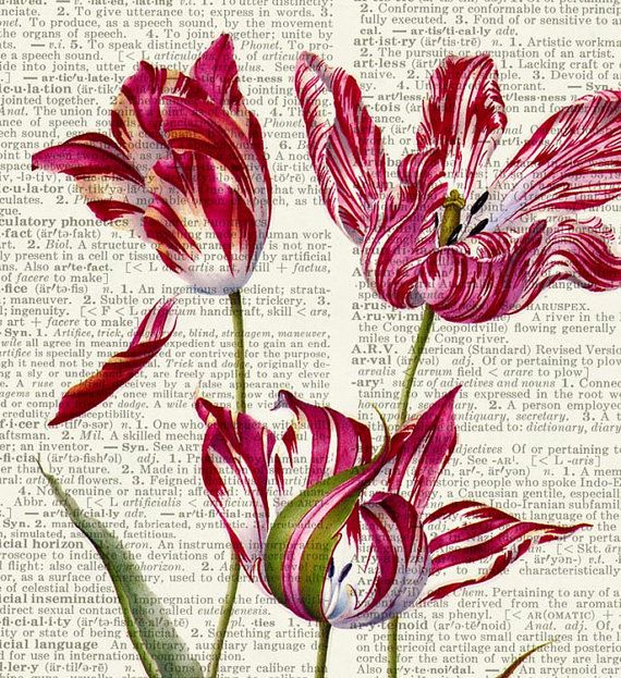 Tulips  17th century Tulip painting printed on page by FauxKiss, $10.00