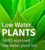 San Antonio / South Texas Low Water Plants list