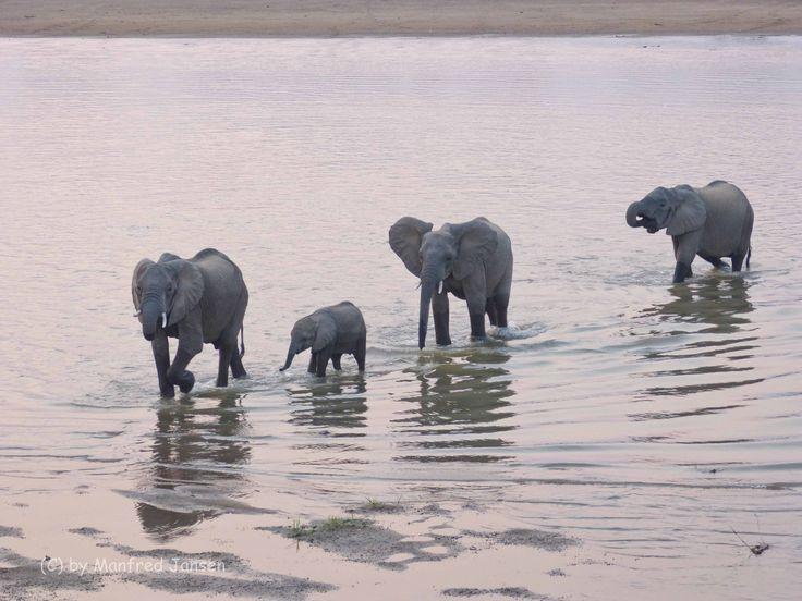South Luangwa NP - Sambia