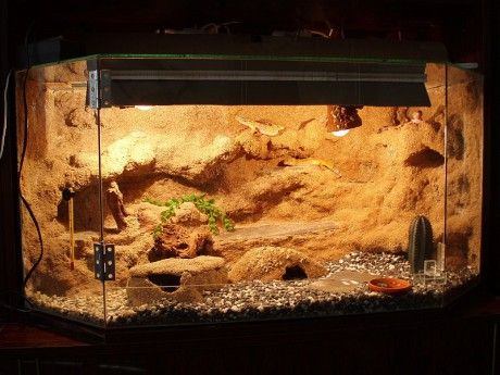 Best 25 Reptile Terrarium Ideas On Pinterest Snake