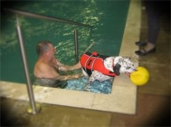 Then of course Animals like us need exercise and swimming is great to exercise an injured or recovering injury