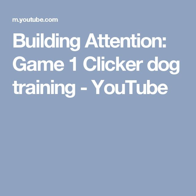 Building Attention: Game 1 Clicker dog training - YouTube