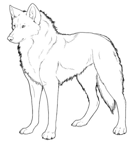 Wolfsbilder Malvorlagen My Blog