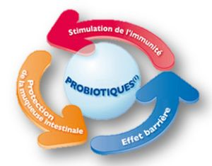 Prébiotique, probiotique & Réjuvélac : les alliés de votre ventre