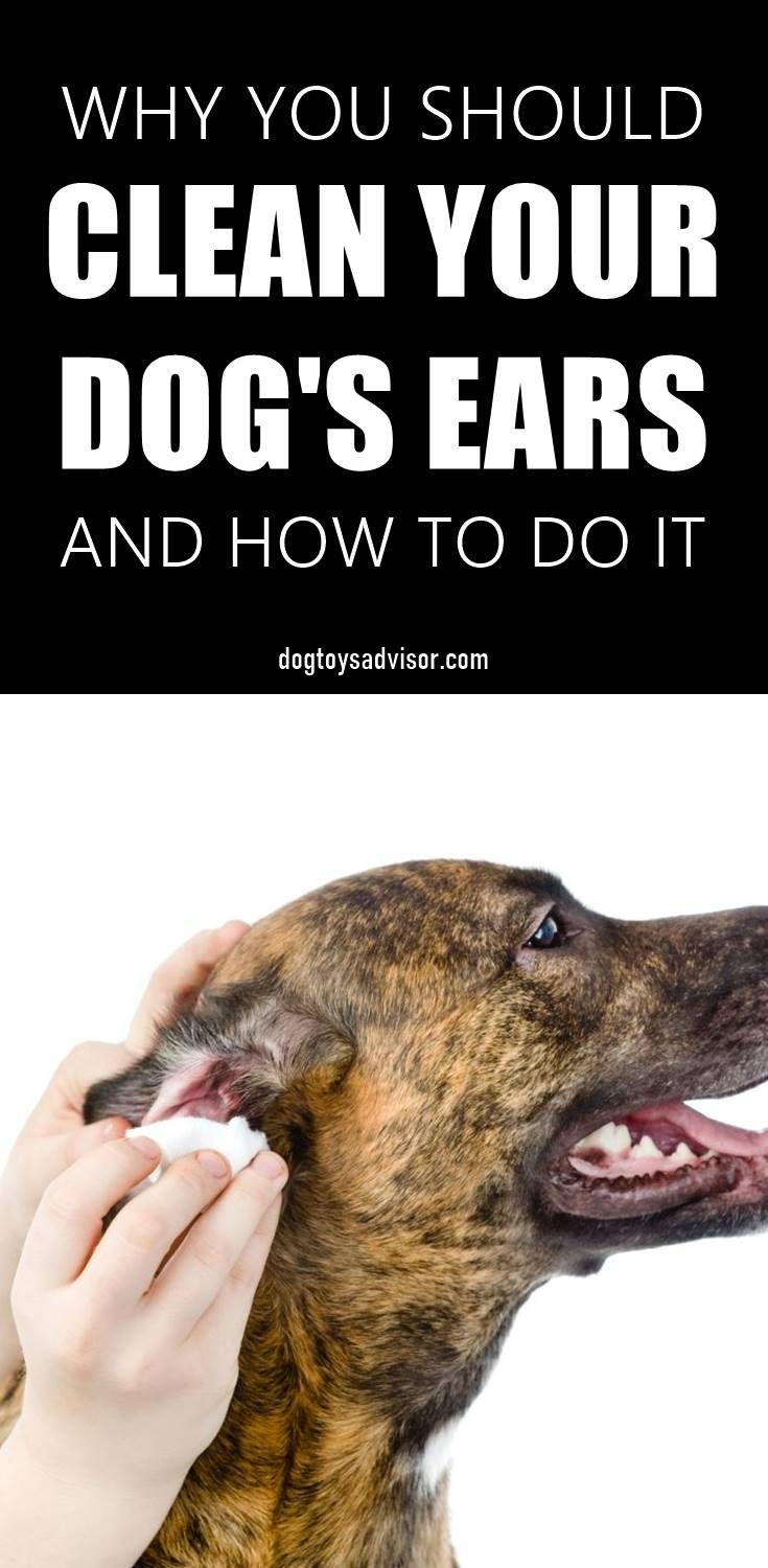 Do you know how often should you clean your dogs ears