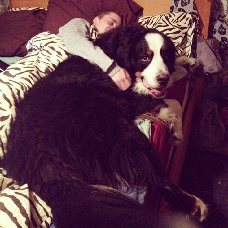Best Big Dogs Images On Pinterest Cutest Dogs Dog And Facts - 29 cutest dog photos existence