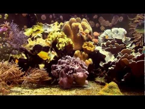 Lounge Music - Relax Music, Harmony & Dream - TROPICAL AQUARIUM IMPRESSIONS - YouTube