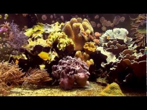 Aquarium - YouTube