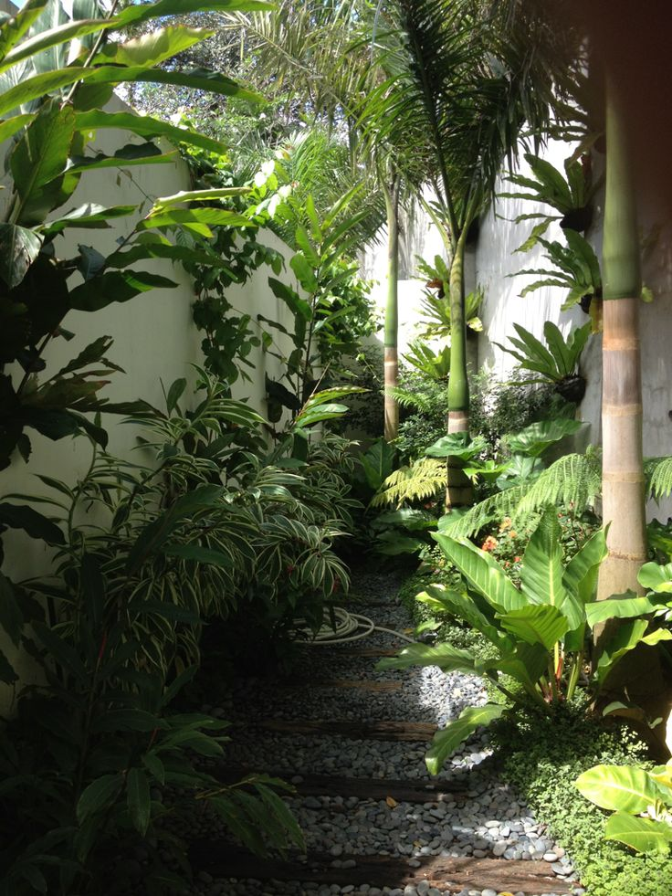278 best images about tropical garden dreams on pinterest for Jungle garden design ideas