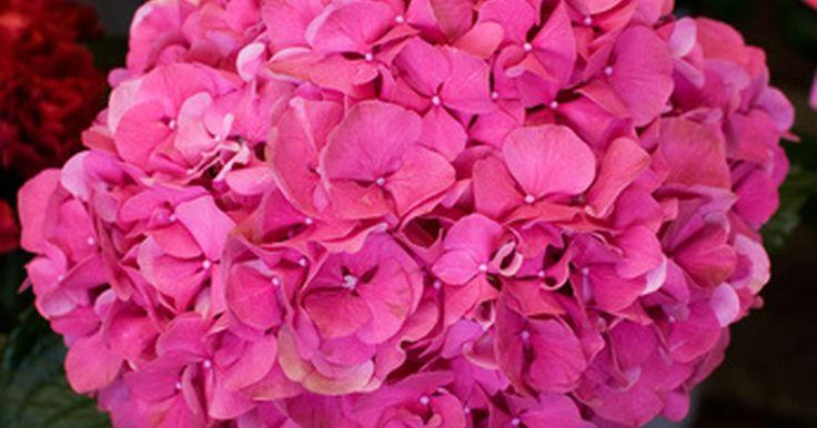 Flores tubulares ricas em néctar. Ricas em néctar, flores tubulares atraem beija-flores, borboletas e abelhas ao jardim. Suas cores aumentam a atração de polinizadores específicos. Vermelho, laranja e outras cores quentes atraem borboletas e beija-flores. Abelhas fazem fila por tons de rosa, azuis e roxos. Listras e manchas no tubo de uma planta tubular funcionam como uma pista de ...