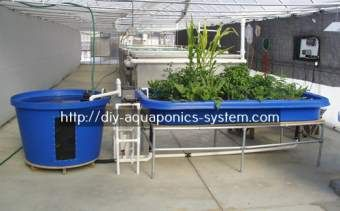 aquaponic system definition - aquaponics supplies philippines.indoor hydroponic kit 4356052079