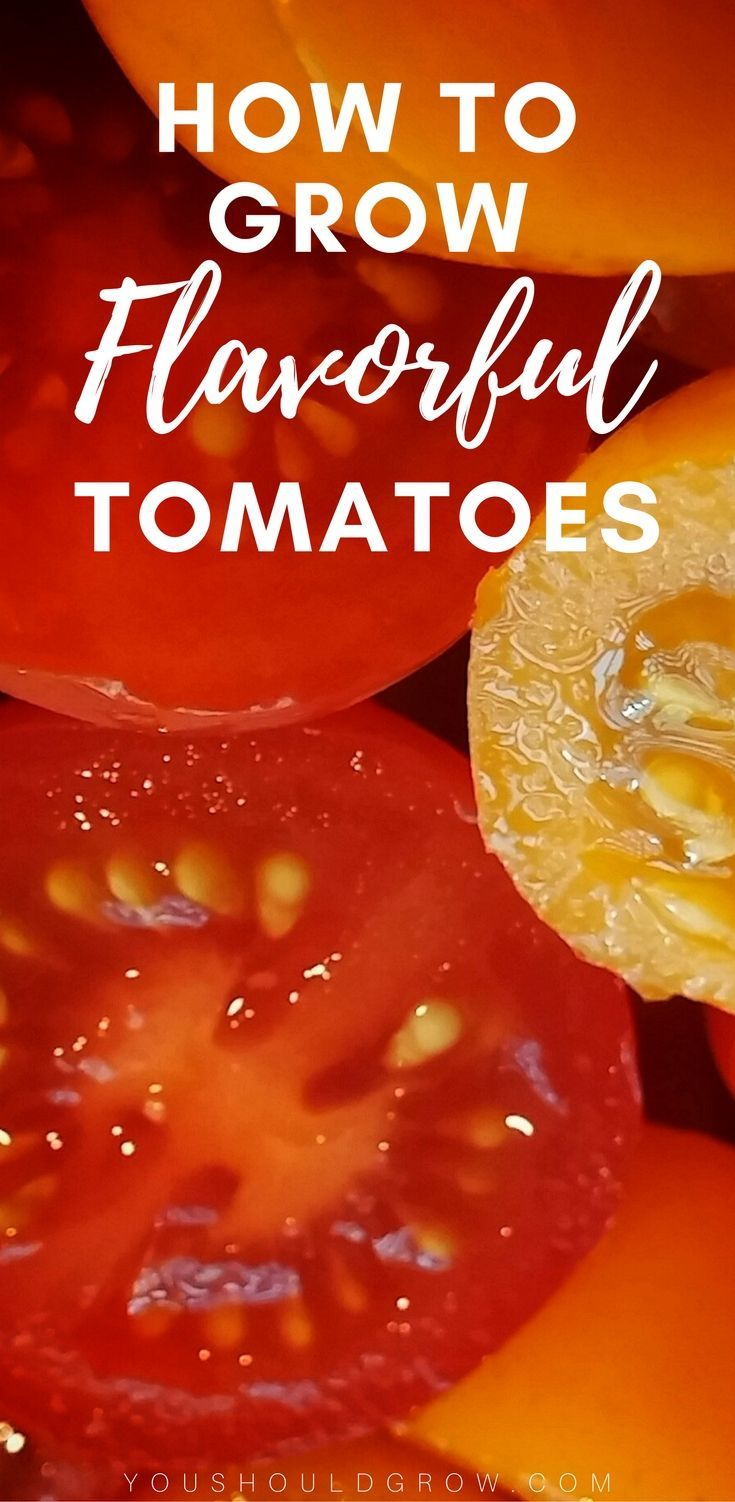 Growing tomatoes. Tomatoes gardening tips. Grow the best tasting tomatoes with these tips!