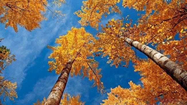 Sonbaharda Ağaç #wallpaper #sonbahar #ağaç #tree #autumn
