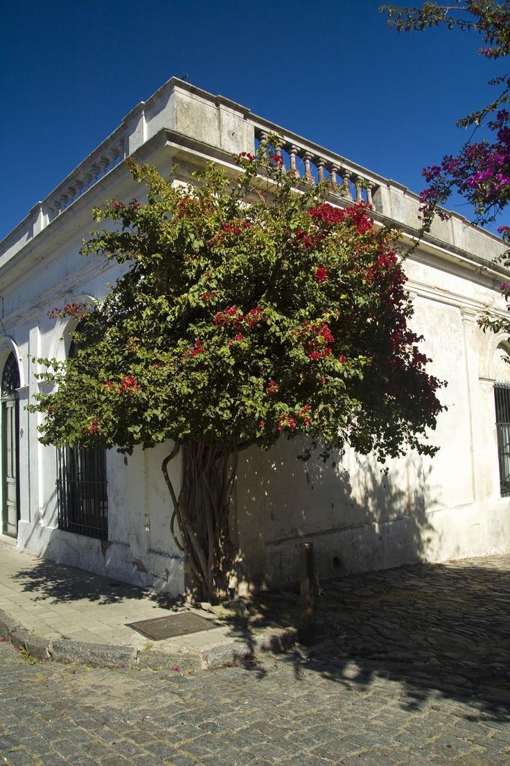 Colonia del Sacramento, Uruguay. World Heritage Site.