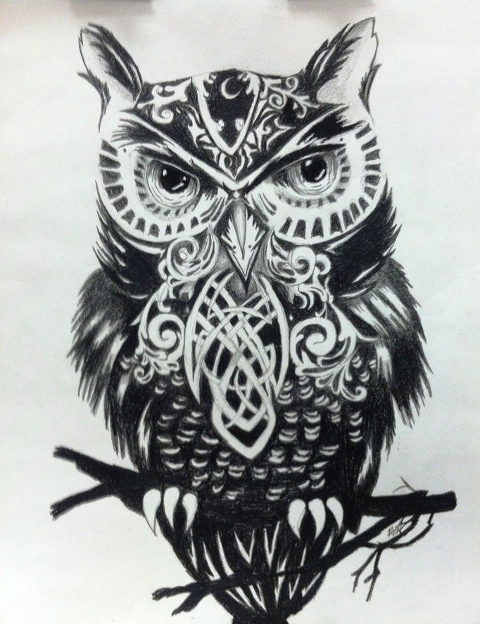 black & white owl (illustrator unknown)