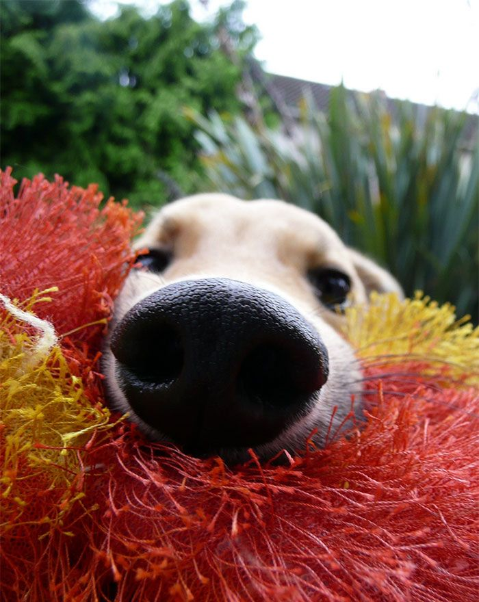 10 fotos de foucinhos de cachorros - Assuntos Criativos