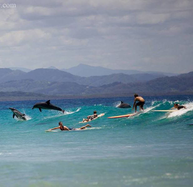 I've experienced this before...one of the most amazing thing I've ever been through...surfing with wild dolphins