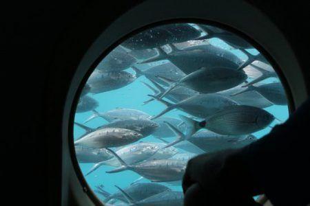 submarin-playa-de-mogan-gran-canaria