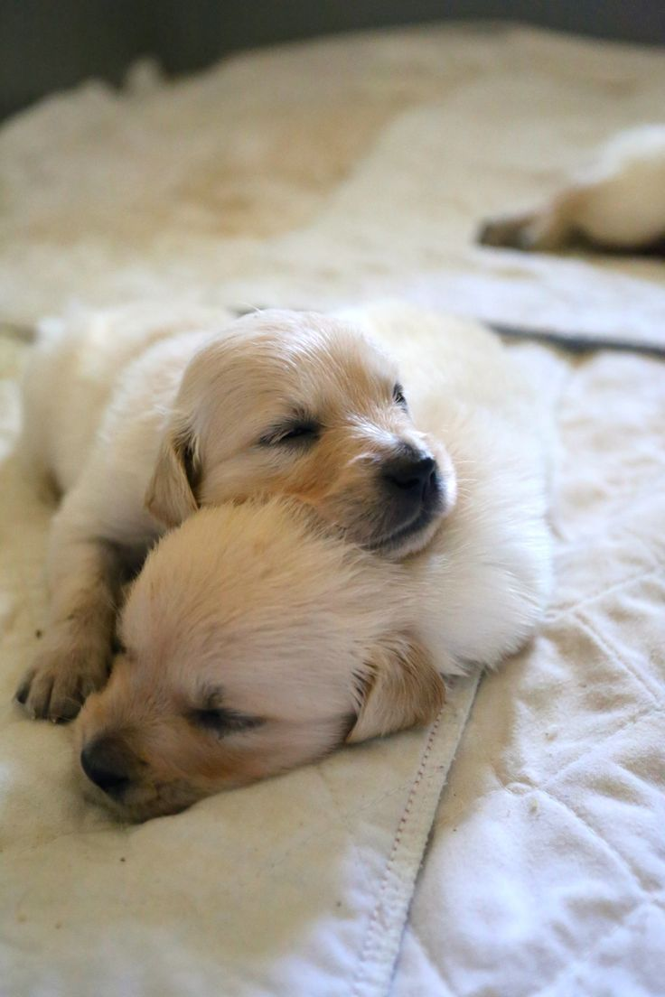 sleeping puppies