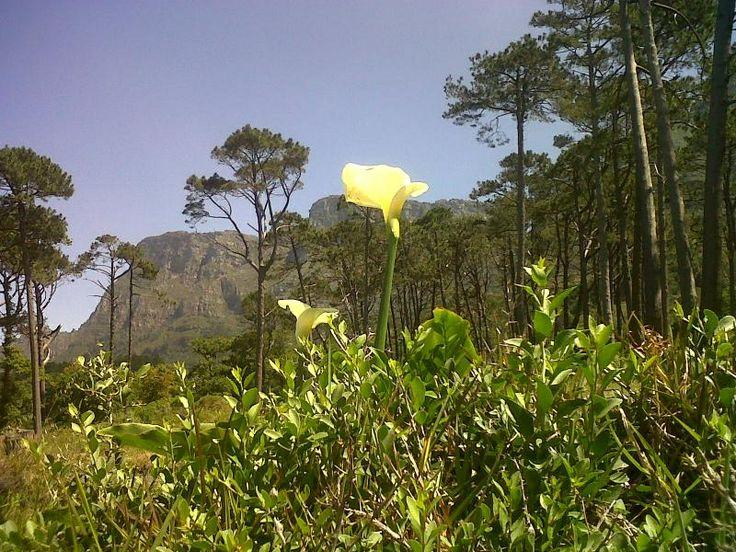 Cape Town and Franshoek Visit