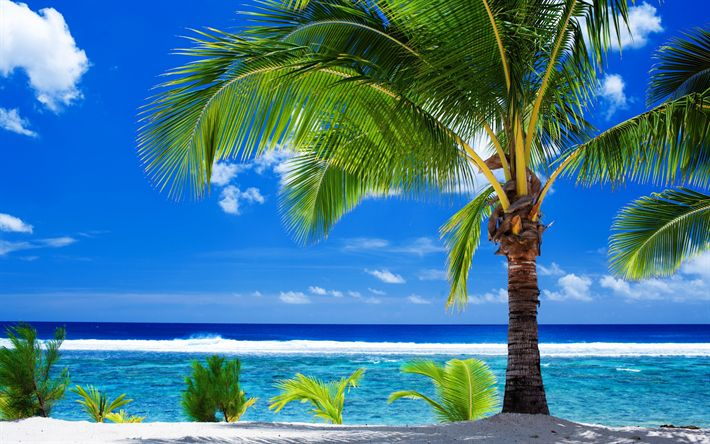 Hämta bilder Sommar, tropiska ön, beach, palmer, resa i sommar, ocean, kusten