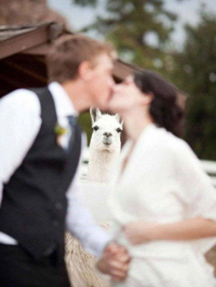 de mariage, photos de famille en groupe and poses de groupe de mariage