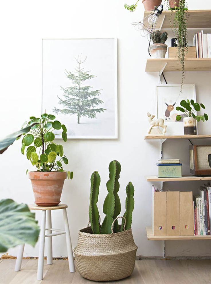 wood + white + plants + open shelves