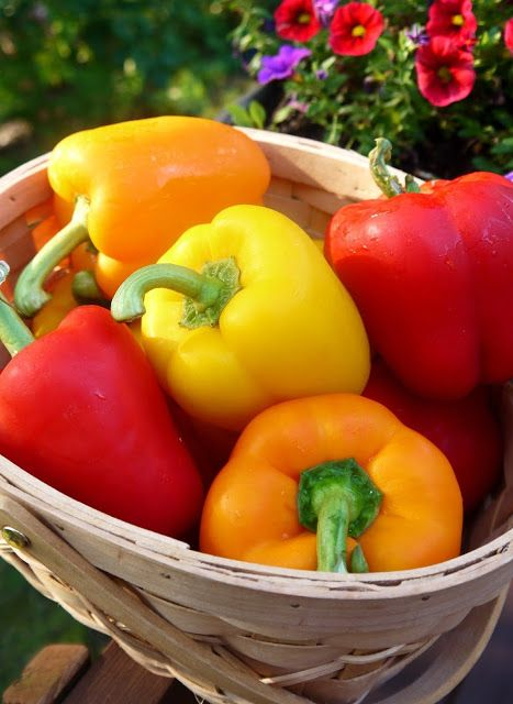 Bint Rhoda's Kitchen: Stuffed Sweet Peppers and Tomatoes:  An Easy Intro...
